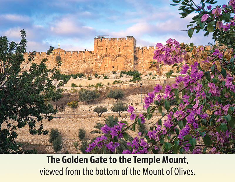 2021 Holy Land Calendar January